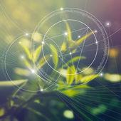 Fotografia Geometria sacra. Matematica, natura e spiritualità nella natura. La formula della natura. Cè senza inizio e senza fine delluniverso e senza inizio e senza fine della vita.