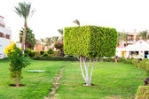 Square topiary tree in Egyptian formal garden. Summertime outdoo