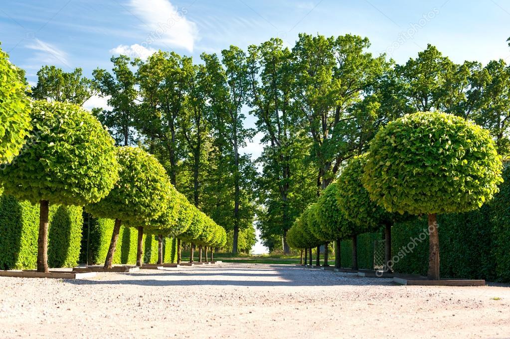 Allée d\'arbres verts topiaires au jardin d\'ornement — Photographie ...