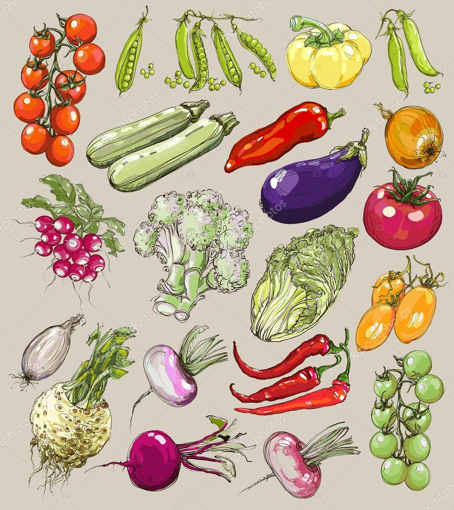 Big collection of hand-drawn vegetables, vector illustration in vintage style.