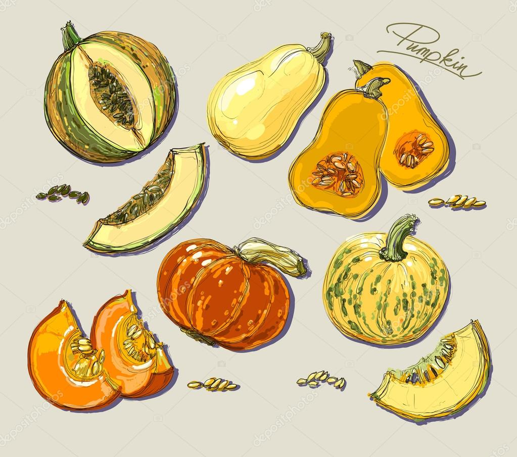 Hand drawn illustration of pumpkin.