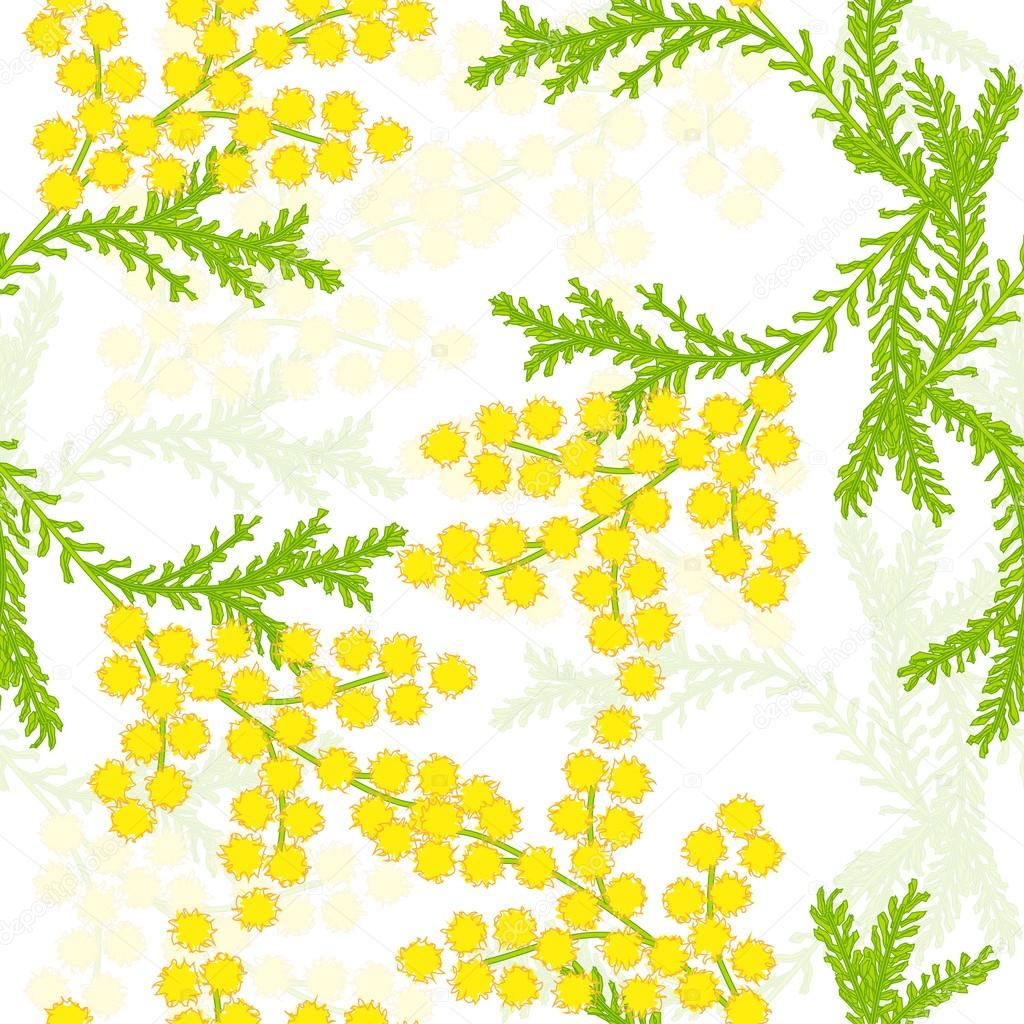 Seamless pattern with flowers of mimosa on a white background. Vector eps 10.