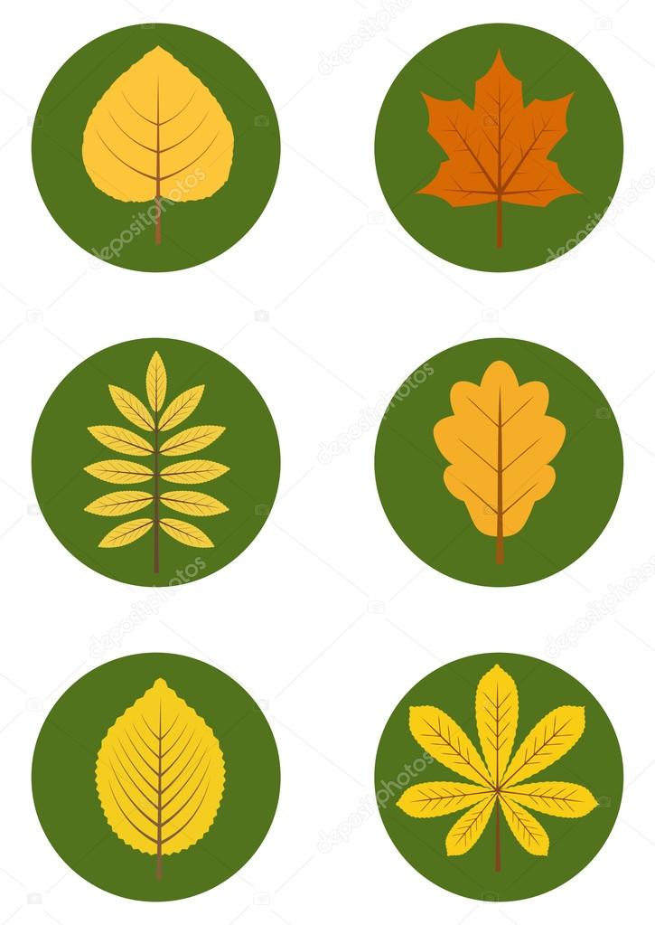 Vector set of flat icons of different autumn leaves. Eps 10.