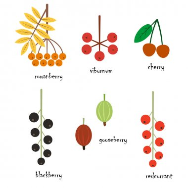 Vector illustration of different berries in flat style on a white background. Eps 10.