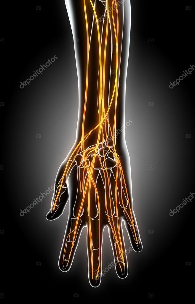 Ilustración 3D de la mano del sistema nervioso — Fotos de Stock ...