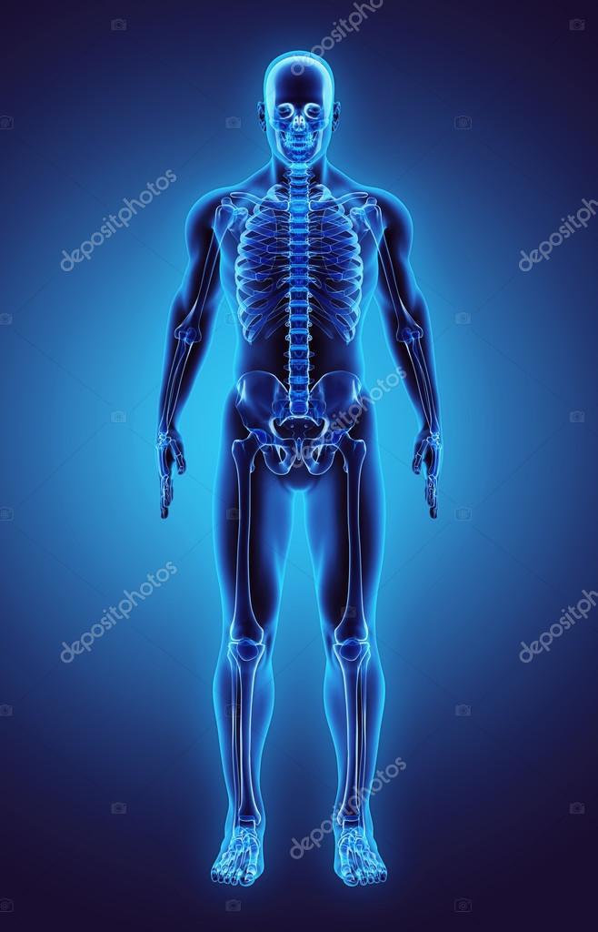 3D Abbildung Teil des menschlichen Skeletts, medizinisches Konzept ...