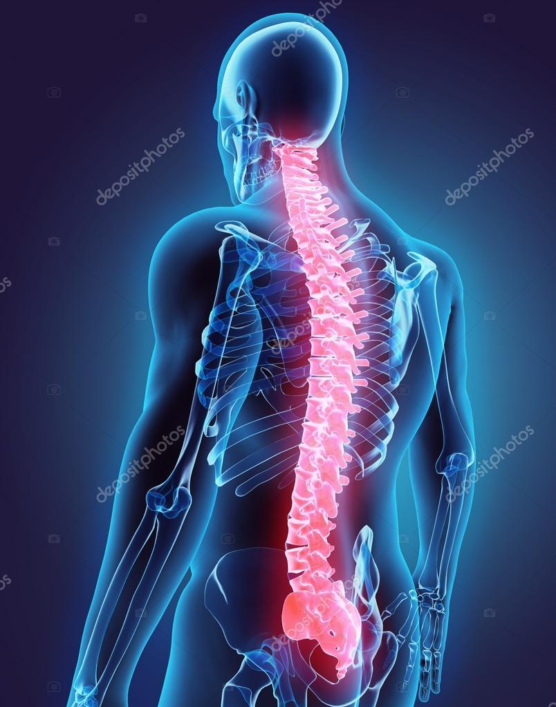 Suficiente ilustração 3D da coluna vertebral, conceito médico — Stock Photo  WC21