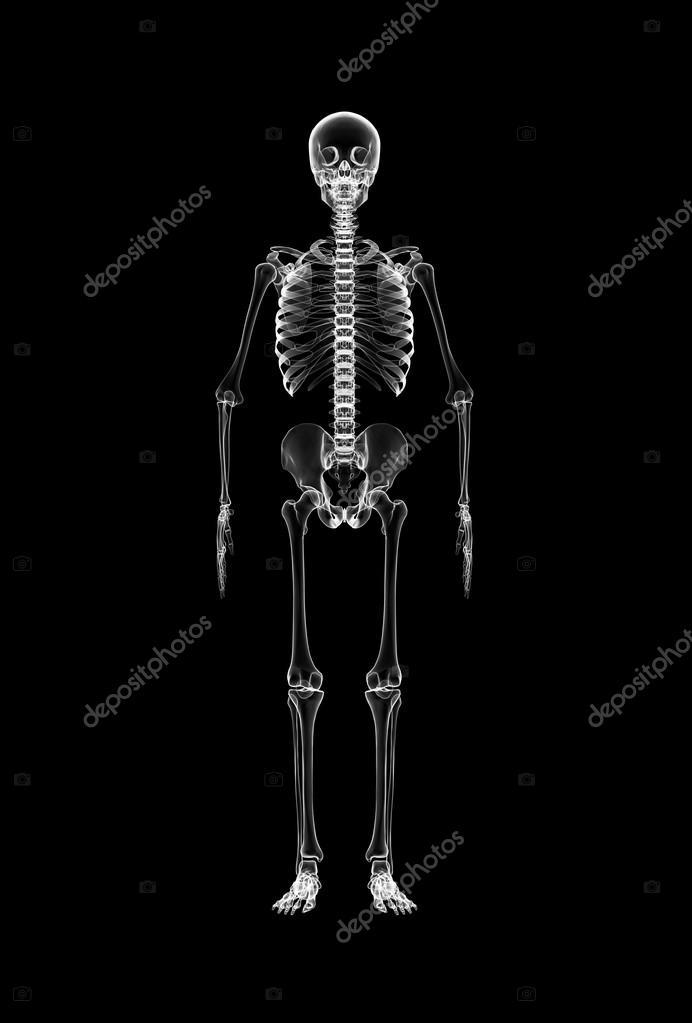 Ganzkörper Röntgen des Skeletts — Stockfoto © yodiyim #117582702