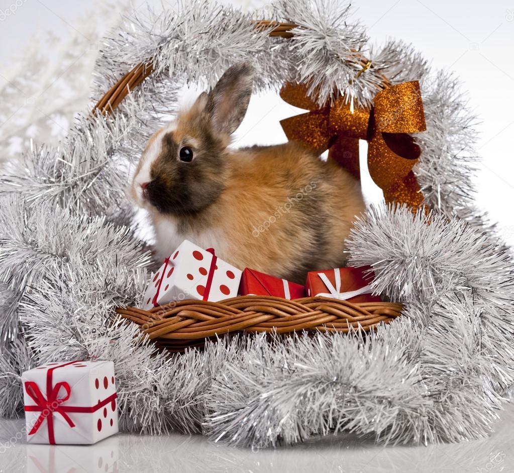 The Christmas Bunny.Christmas Bunny And Rabbit Stock Photo C K Kijewska 62895081