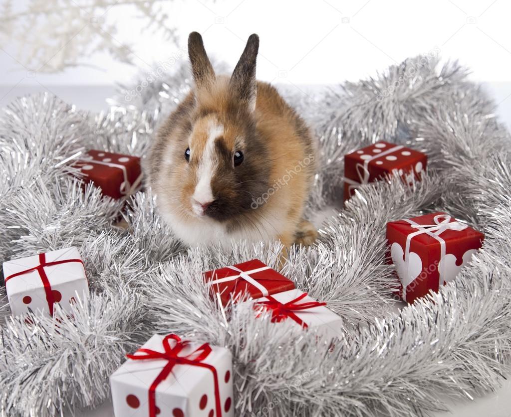 The Christmas Bunny.Christmas Bunny And Rabbit Stock Photo C K Kijewska 62895913