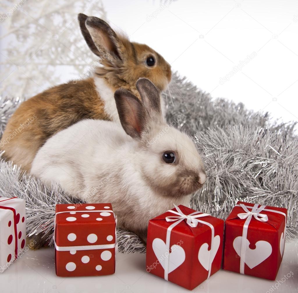 The Christmas Bunny.Christmas Bunny And Rabbit Stock Photo C K Kijewska 62896033