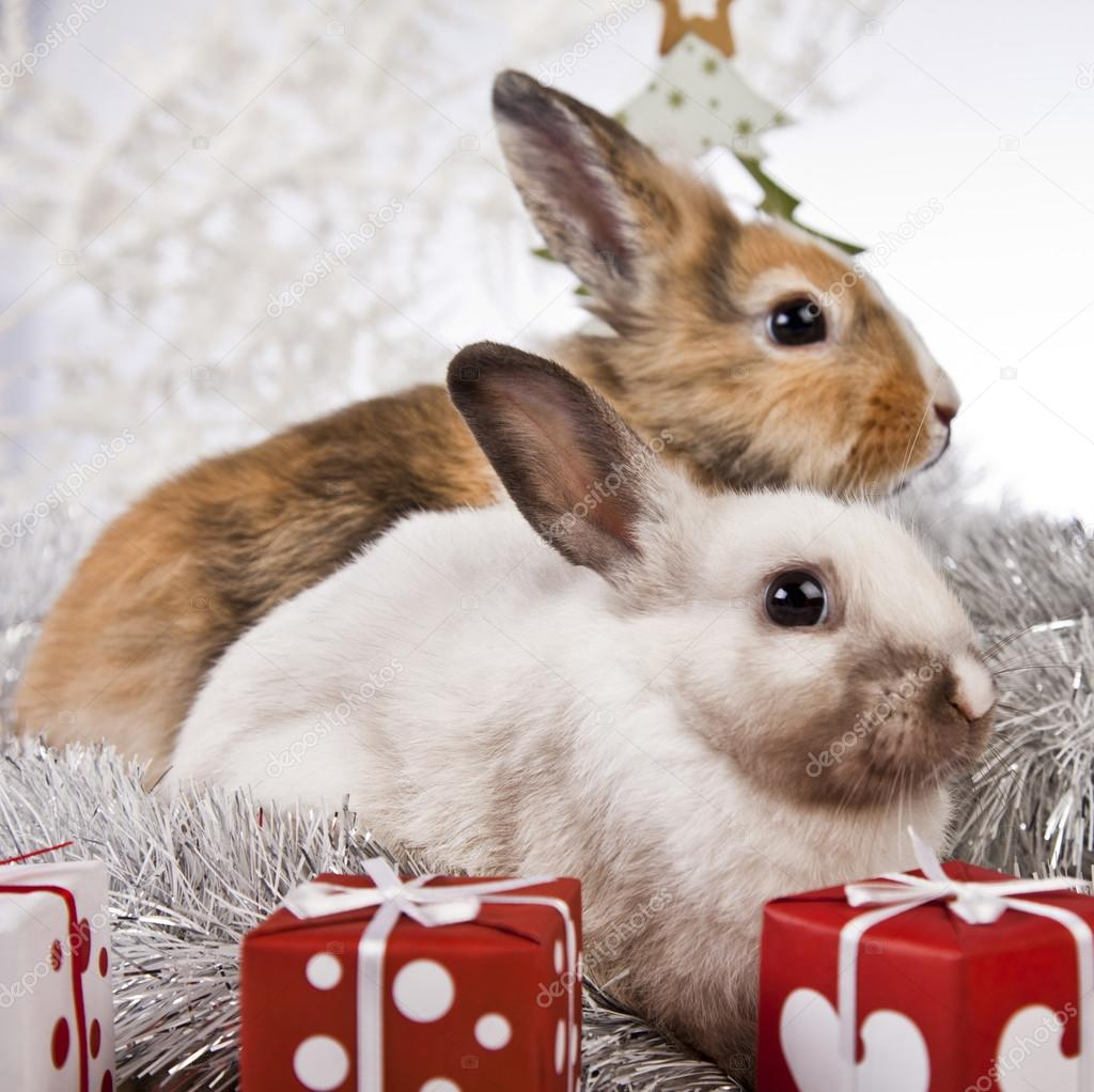 The Christmas Bunny.Christmas Bunny And Rabbit Stock Photo C K Kijewska 62896081