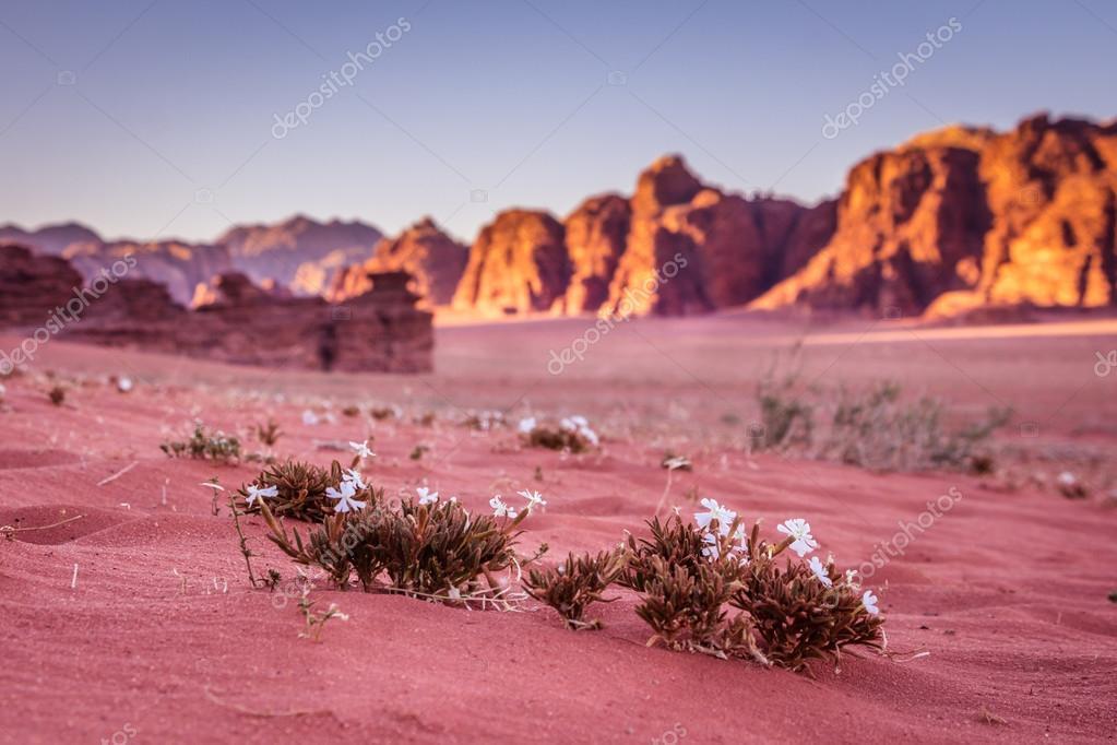 Spring Wadi Rum desert - Valley of the Moon in Jordan. UNESCO Wo — Stock
