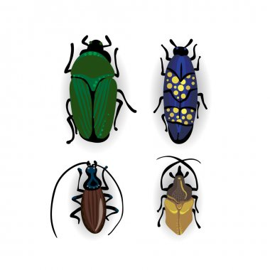 Colorful drawing of small beetles.