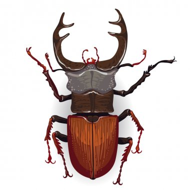 Colorful drawing of stag beetle.