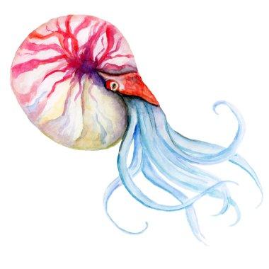 Watercolor illustration of a sea creature