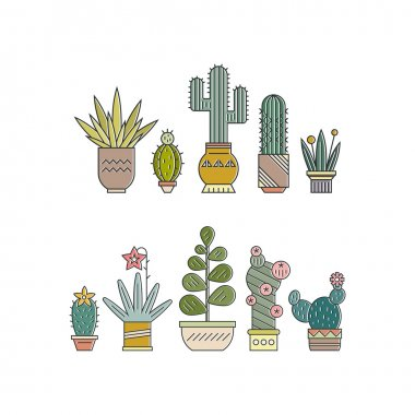 succulents and cactuses in pots