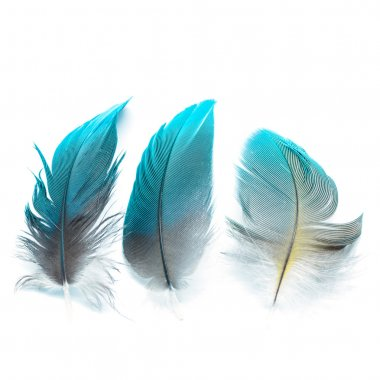 Colorful bird feathers, isolated on white background stock vector