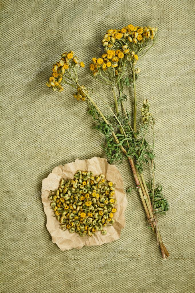 Tansy.Dried. Herbal medicine, phytotherapy medicinal herbs.