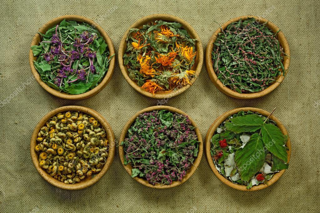 Dried. Herbal medicine, phytotherapy medicinal herbs.