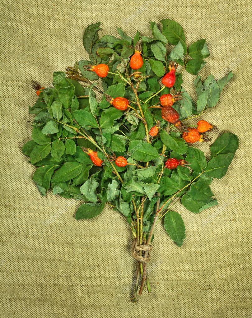 innamon rose.Dried herbs. Herbal medicine, phytotherapy medici