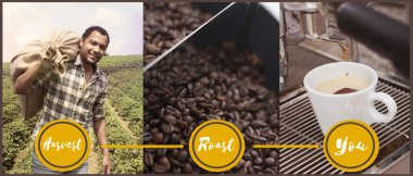 Coffee Process from harvesting to enjoying it
