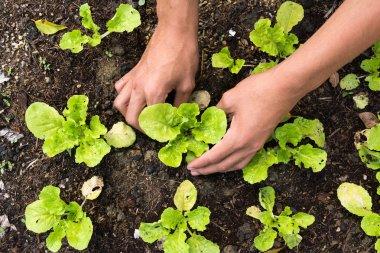 Planting vegetable garden