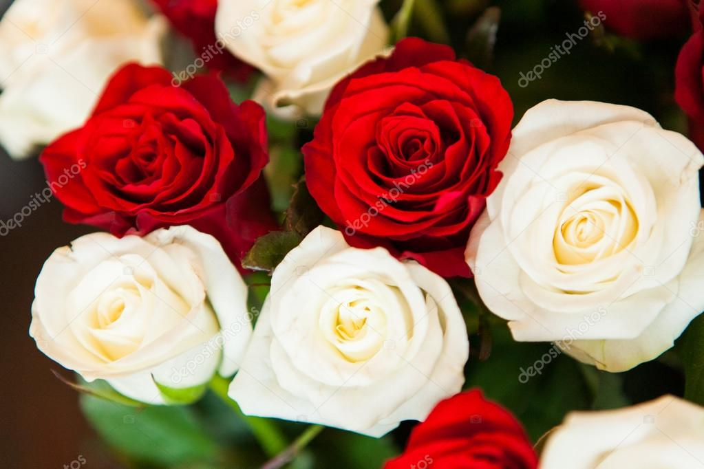 Imágenes Rosas Hermosas Rojas Y Blancas Hermosas Rosas Rojas Y