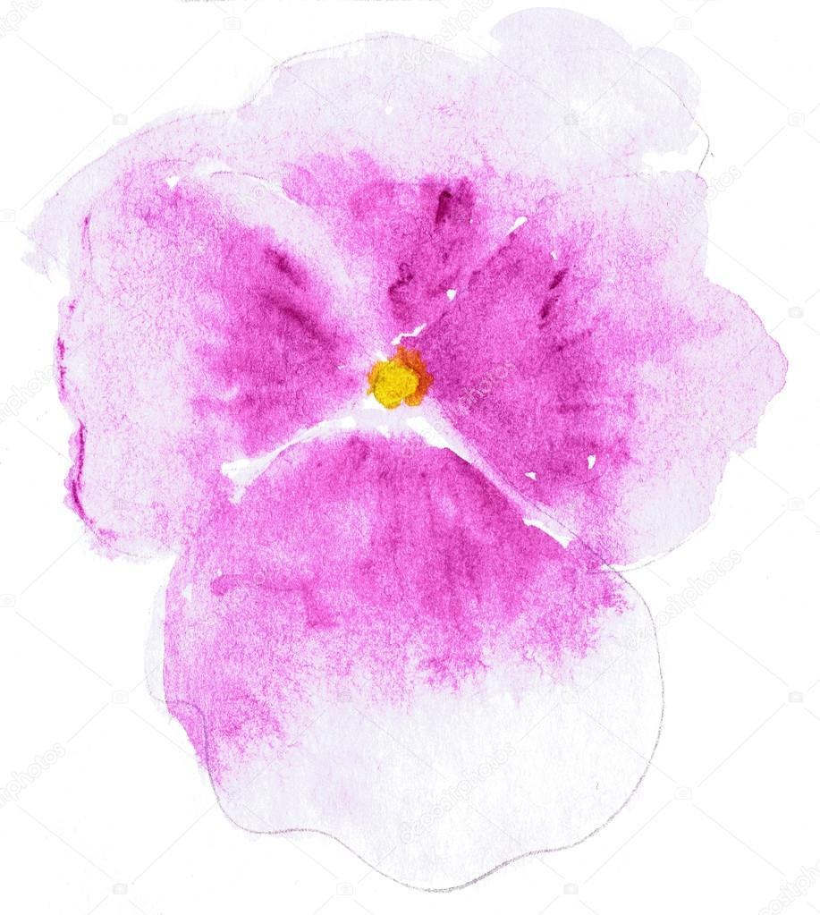 Watercolor illustration of stylized Pansy flower. Color illustration of flowers in watercolor paintings.