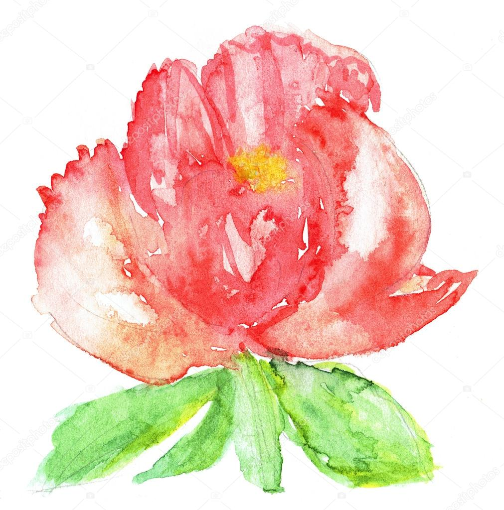 Watercolor illustration of stylized peony flower. Color illustration of flowers in watercolor paintings.