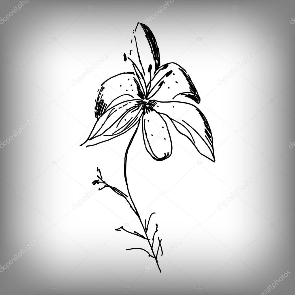 Dibujos Flor De Lis Flor De Lis Vector Ilustración A Mano