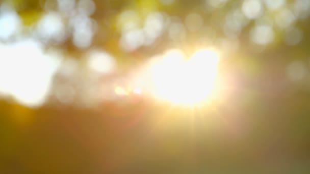 schöne Herbstbäume - Fokuswechsel
