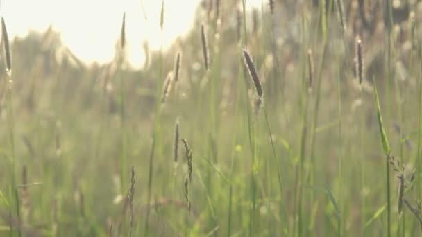 Příroda - Krásná louka při západu slunce