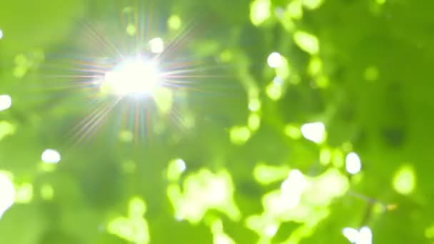 Abstract Fresh Green Leaves against the Sun with Sunbeams - defocused - camera pan
