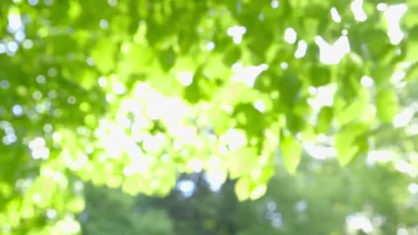 Abstract fresh green Leaves against the Sun in the Wind - defocused - camera pan