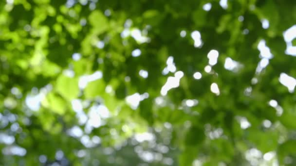 Defocused abstract fresh green Nature Background with Sunbeams - camera pan