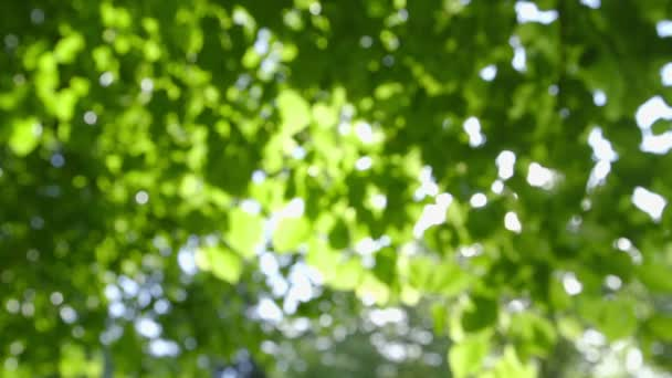 Abstract fresh green Leaves against the Sun - defocused - camera pan
