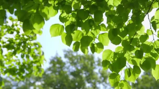 Bello foglie fresco verde contro il sole - cambiamento di nitidezza