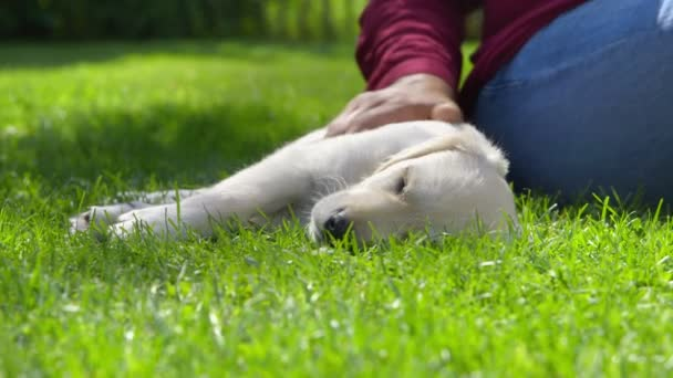 Woman is Stroking her Sleeping Dog
