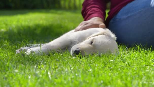 Žena je hladil její spící pes