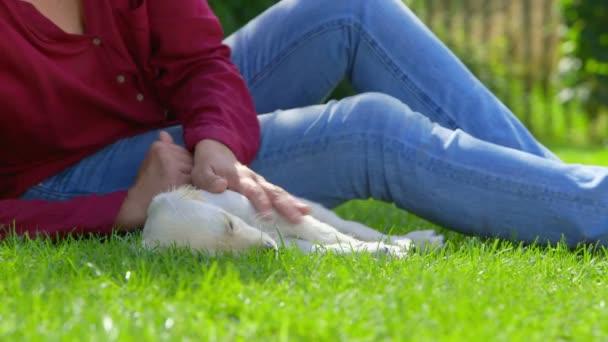 Woman is Stroking her Sleeping Golden Retriever Puppy