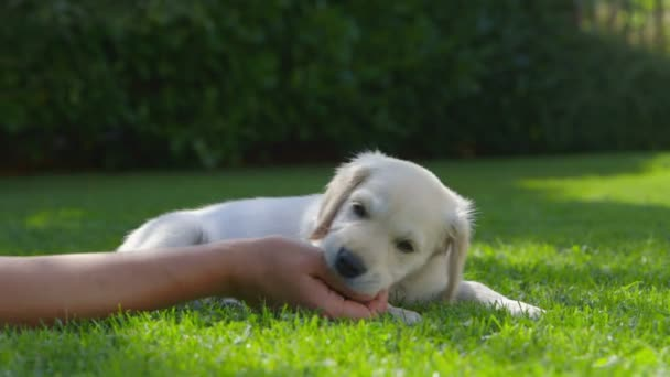Žena se hraje s štěně