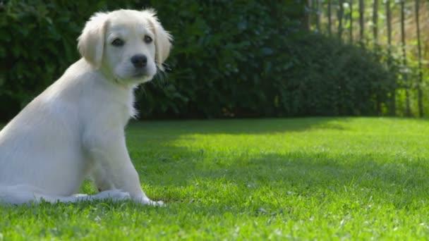 Roztomilé štěně v zahradě