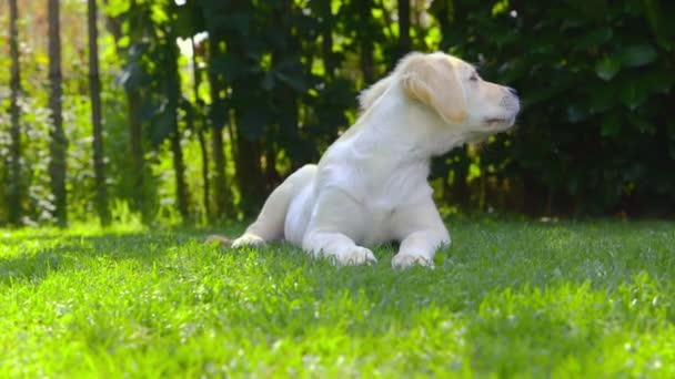 Cute Puppy in the Garden - looking around - barking
