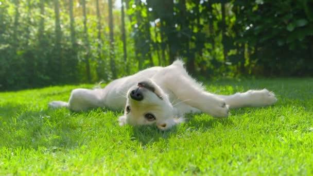 Roztomilý šťastný pes v zahradě