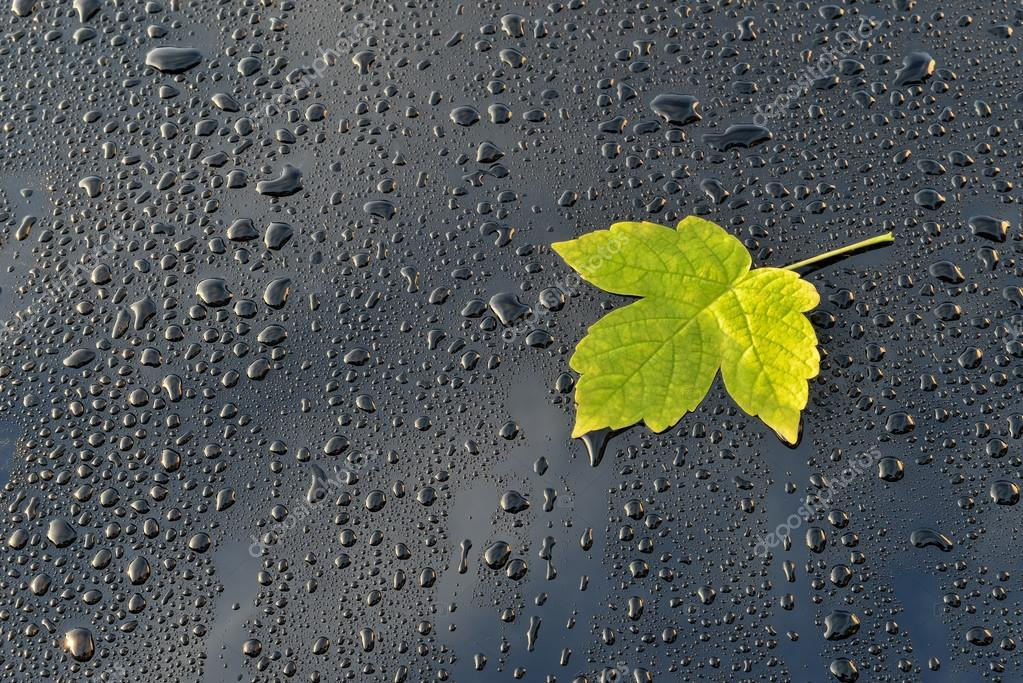 Water Drops on Polished black Car paint with Leaf