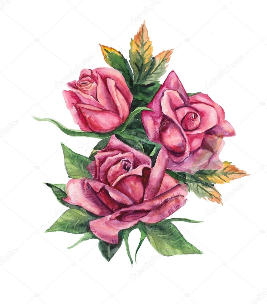 Dibujos Rosas Tres Rosas Patrón De Color De Rosa Dibujos Boda