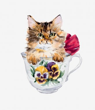 Kitten in the cup.