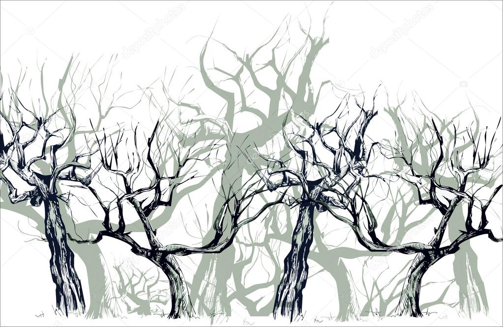 Deciduous wood. Silhouettes of apple-trees.