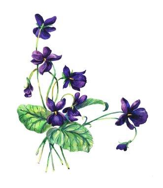 Bouquet of  violets.